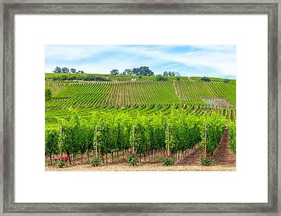 Decorated Vineyards Framed Print