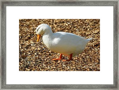 Decorative Duck Series A5717 Framed Print
