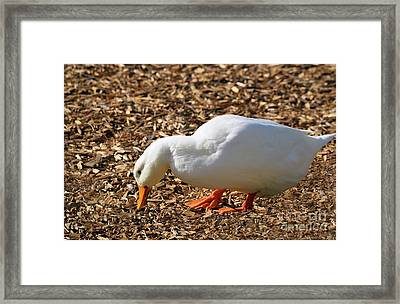 Decorative Duck Series C5717 Framed Print