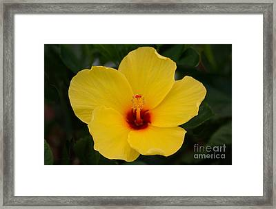 Decorative Floral Photo A9416 Framed Print