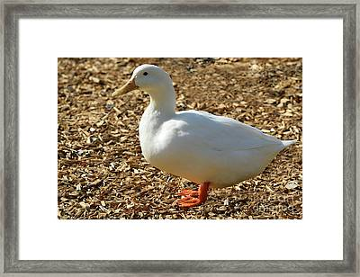 Decorative Duck Series 342717 Framed Print