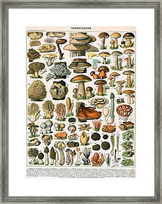 Decorative Print Of Champignons By Demoulin Framed Print by American School