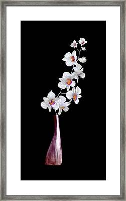 Decorator Set-orchids Wine Framed Print by Brent Rowlett
