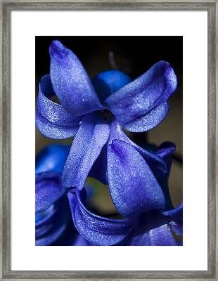 Deep Blue Flower Framed Print by Svetlana Sewell