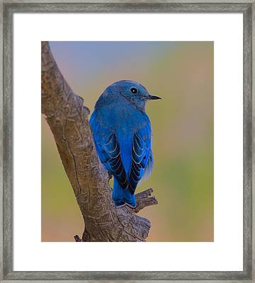 Deep Blue Framed Print