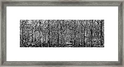 Deep Forest Bw Framed Print