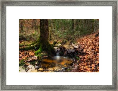 Deep Forest Creek Framed Print by Rich Leighton