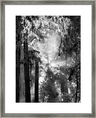Deep Forest Light Framed Print by Leland D Howard