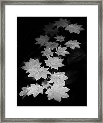 Deep Forest Maple Framed Print