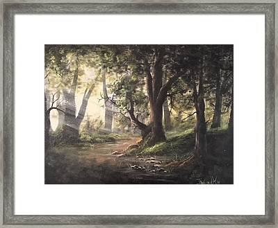 Deep Forest Rays  Framed Print