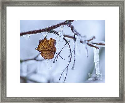 Deep Freeze Framed Print