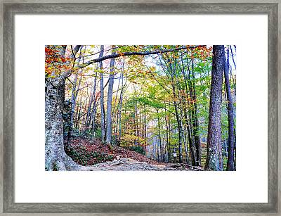 Deep In The Forest Framed Print by Brittany H