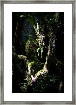 Framed Print featuring the photograph Deep In The Forest by Lori Seaman