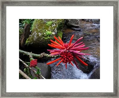Deep In The Forest No.2 Framed Print by Gregory Young