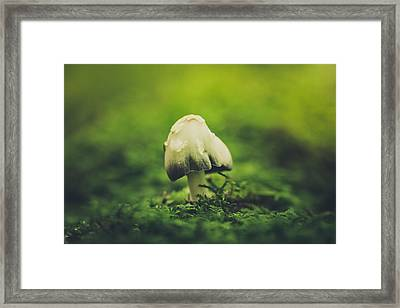 Deep In The Forest Framed Print by Shane Holsclaw