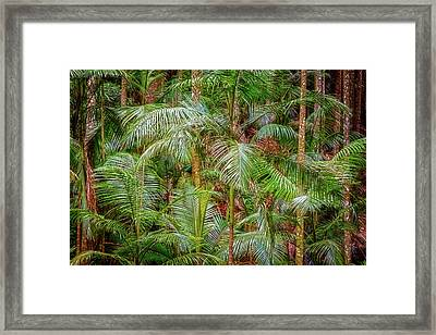 Framed Print featuring the photograph Deep In The Forest, Tamborine Mountain by Dave Catley