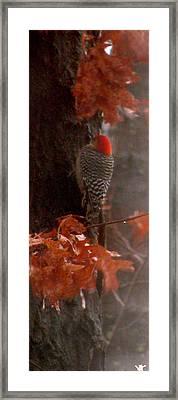 Deep In The Forest Woodpecker Framed Print by Debra     Vatalaro