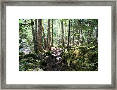 Deep In The Oregon Forest Framed Print