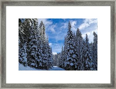 Deep In The Snowy Forest Framed Print by Lynn Hopwood