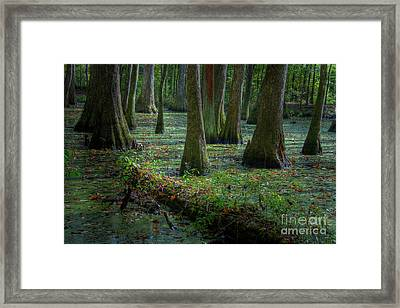 Deep In The Swamp Framed Print by Larry Braun