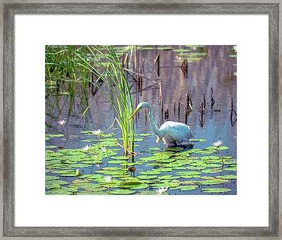 Deep In The Water Framed Print
