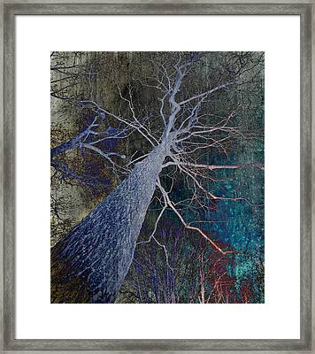 Deep In The Woods Framed Print by Marianna Mills - Anthony Quinn