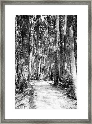 Deep In The Woods  Framed Print by Phill Doherty
