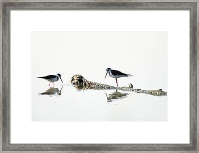 Deep In Thought Framed Print by Debra Martz