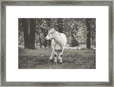 Framed Print featuring the photograph Deep In Thought by Viviana  Nadowski