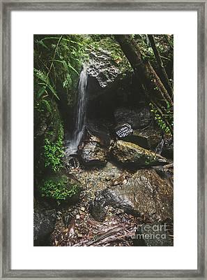 Deep Into The Rainforest Framed Print by Joan McCool