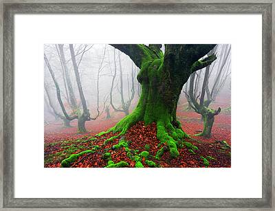 Deep Of The Forest Framed Print by Mikel Martinez de Osaba