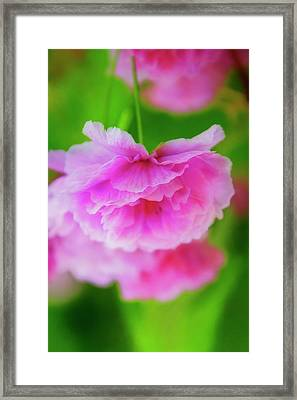 Deep Pink Blossoms Framed Print