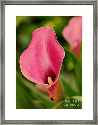 Deep Pink Framed Print by Kathleen Struckle