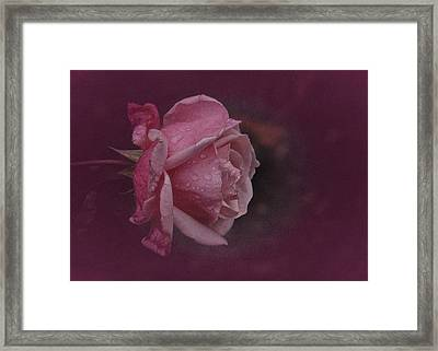Deep Pink Nov Rose Framed Print