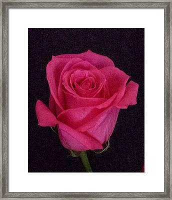 Deep Pink Rose On Black Framed Print