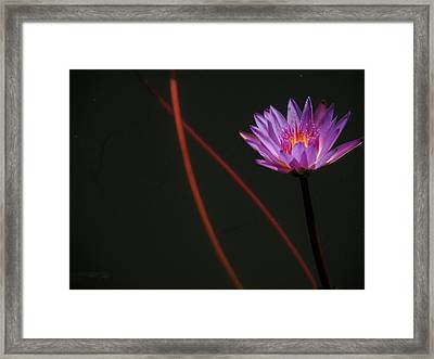 Framed Print featuring the photograph Deep Purple by Rosalie Scanlon