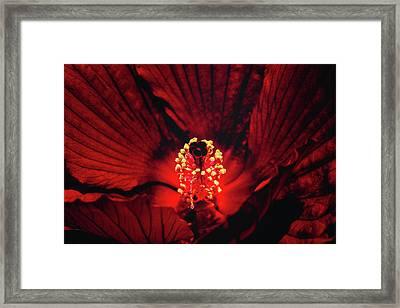 Deep Red Framed Print by Jae Mishra