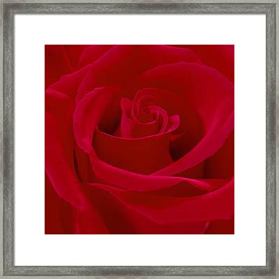 Deep Red Rose Framed Print by Mike McGlothlen