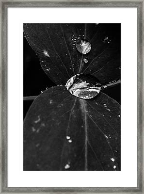 Framed Print featuring the photograph Deep Refraction Between Leaves by Darcy Michaelchuk