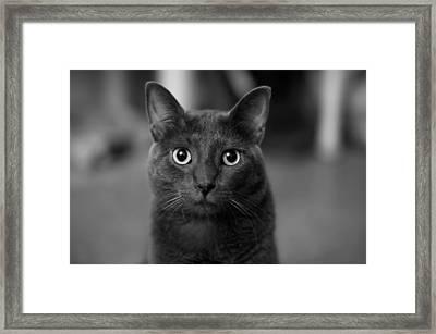 Deep Stare Framed Print by Mandy Wiltse