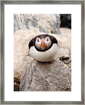 Deep Thinker Framed Print by Brent L Ander