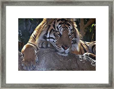 Deep Thought Framed Print by KatagramStudios Photography
