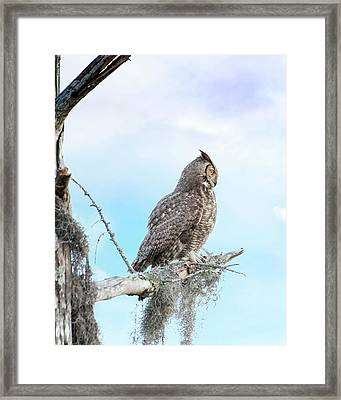 Deep Thoughts Of The Great Horned Owl Framed Print by Mark Andrew Thomas
