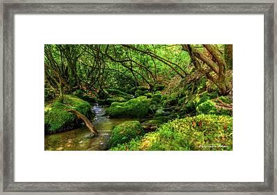 Deep Woods Stream Framed Print