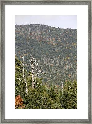 Deeper Into Forest Framed Print