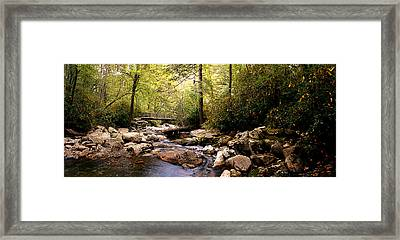 Deepwoods Luxuries Framed Print by David A Brown