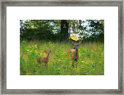 Deer And Fawn Framed Print by John Burk