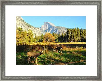 Deer And Half Dome Framed Print by Sandy L. Kirkner