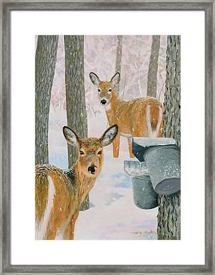 Deer And Sap Buckets Framed Print