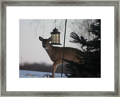 Deer At A Bird Feeder Framed Print by Magi Yarbrough